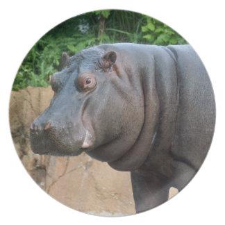 hippo-6 dinner plates