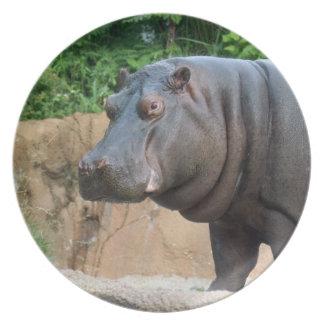 hippo-6 plates