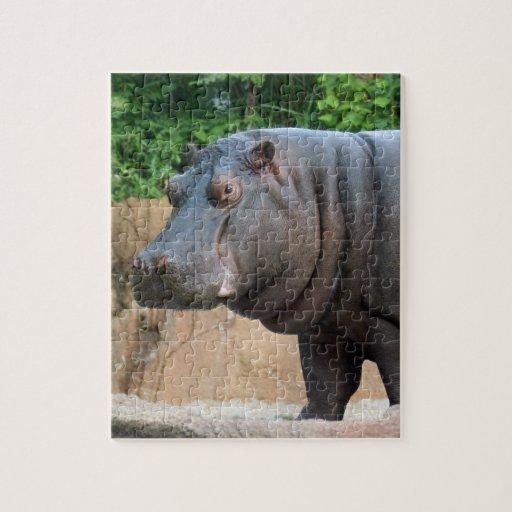 hippo-6 puzzles con fotos
