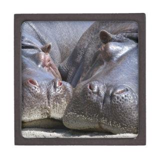 hippo-783 jewelry box