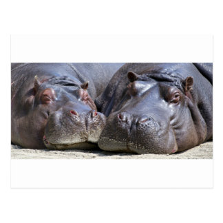 hippo-783 postal