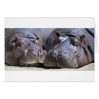 hippo-783 tarjeta de felicitación