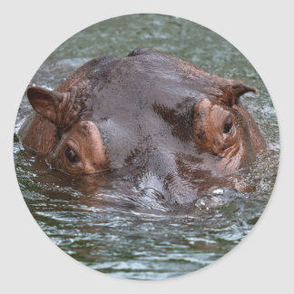 Hippo 8879 classic round sticker