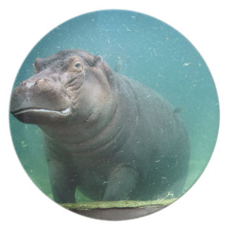 hippo-8 dinner plates