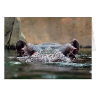 hippo-9 card