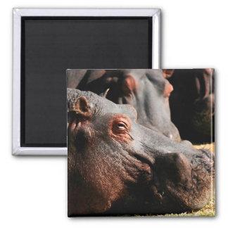 Hippo attitude magnet