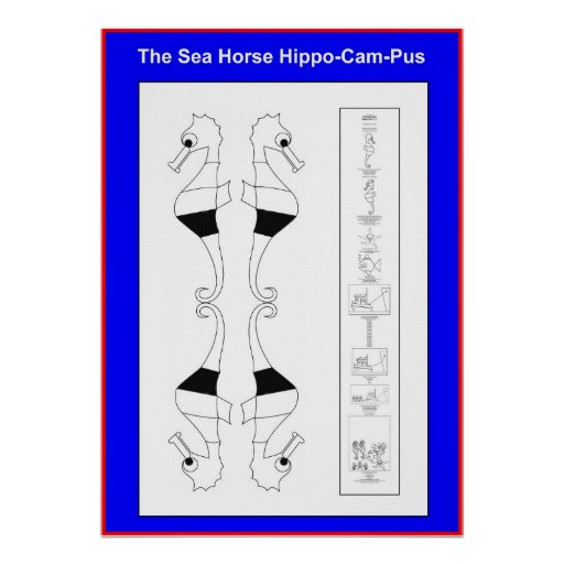 Hippo-Cam-Pus the Seahorse color yourself poster -