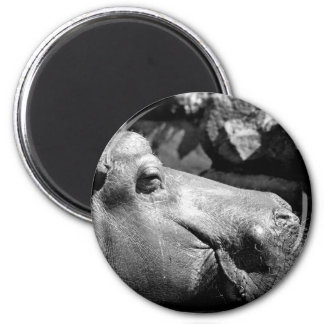Hippo Doze Magnet