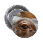 hippo-eye10x10 pinback buttons