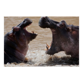 Hippo Fight Poster