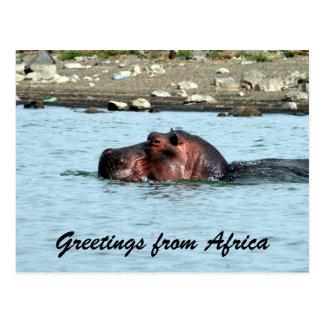 hippo greetings postcard