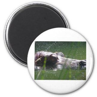 hippo hippopotamus magnet