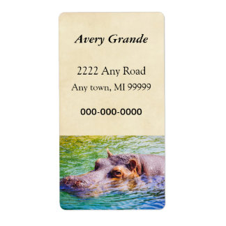 Hippo In Colorful Water, Animal Photography Label