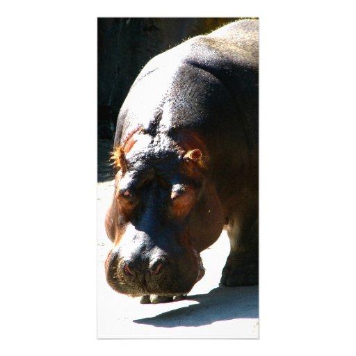 Hippo Photo Card Template