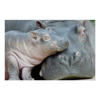 Hippo Poster