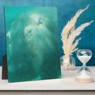 Hippo Under Water  Plaque