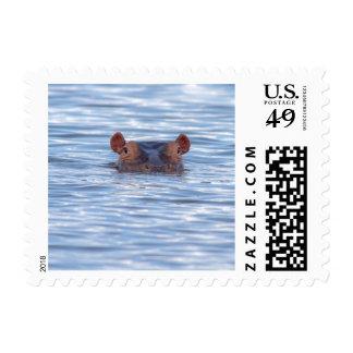 Hippo Wildlife Postage