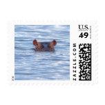 Hippo Wildlife Postage Stamp