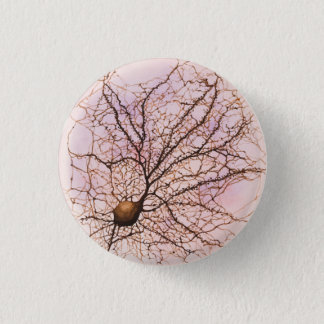 Hippocampal neuron - Button & Pin
