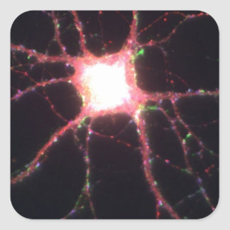 Hippocampal neurons 2 square sticker