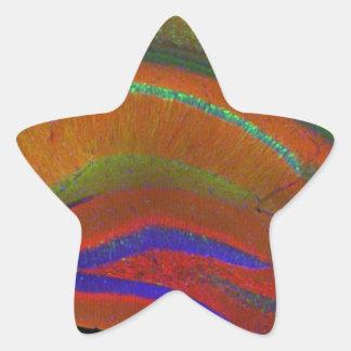 Hippocampal neurons 3 star sticker