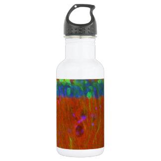 Hippocampal neurons 4 18oz water bottle