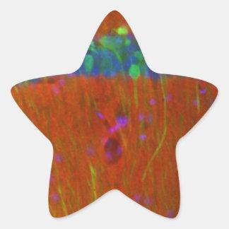Hippocampal neurons 4 star sticker