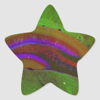 Hippocampal neurons star sticker