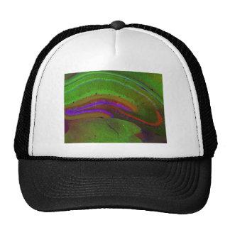 Hippocampal neurons trucker hat