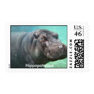 Hippopatamus Stamp