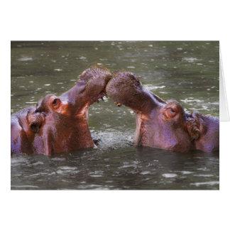 Hippopotami Hippopotamus Amphibius Trying to Kiss Card