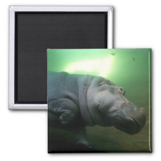 Hippopotamus Abstract 2 Inch Square Magnet