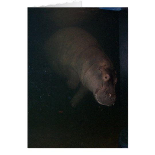 Hippopotamus Abstract #4 Card