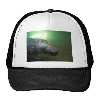 Hippopotamus Abstract Trucker Hat