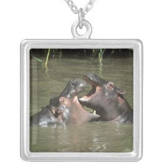Hippopotamus, (amphibius del H.), madre y jóvenes Collar Personalizado