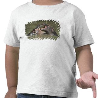 Hippopotamus, (amphibius del H.), madre y jóvenes Camiseta