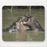 Hippopotamus, (amphibius del H.), madre y jóvenes Tapetes De Ratón
