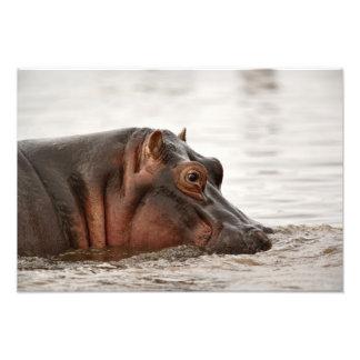 Hippopotamus, amphibius del Hippopotamus, lago Fotografía