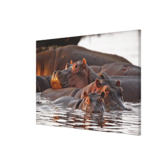 Hippopotamus, amphibius del Hippopotamus, lago Impresiones En Lona