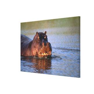 Hippopotamus en el río lona estirada galerías