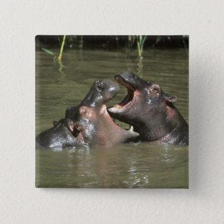 Hippopotamus, (H. amphibius), mother & young Button