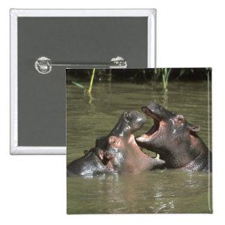 Hippopotamus, (H. amphibius), mother & young Pin