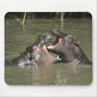 Hippopotamus, (H. amphibius), mother & young Mouse Pads