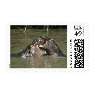 Hippopotamus H amphibius mother young Postage Stamps