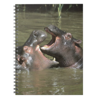 Hippopotamus, (H. amphibius), mother & young Spiral Notebook
