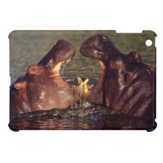 Hippopotamus (Hippopotamus Amphibius) Bulls iPad Mini Case
