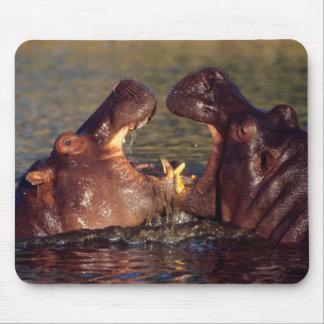 Hippopotamus (Hippopotamus Amphibius) Bulls Mouse Pad