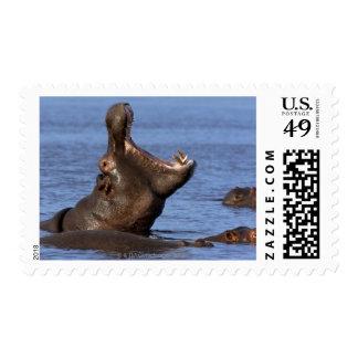 Hippopotamus (Hippopotamus amphibius) in the Postage