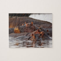 Hippopotamus, Hippopotamus amphibius, Lake Jigsaw Puzzle