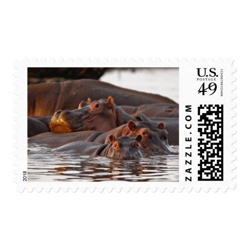 Hippopotamus, Hippopotamus amphibius, Lake Postage Stamp